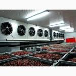 Холодильное оборудование для овощи-фрукты-ягоды-хранилищ от10-1000 куб